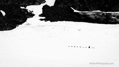 Dog Sledding on the Glacier
