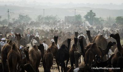 Pushkar Camer Fair