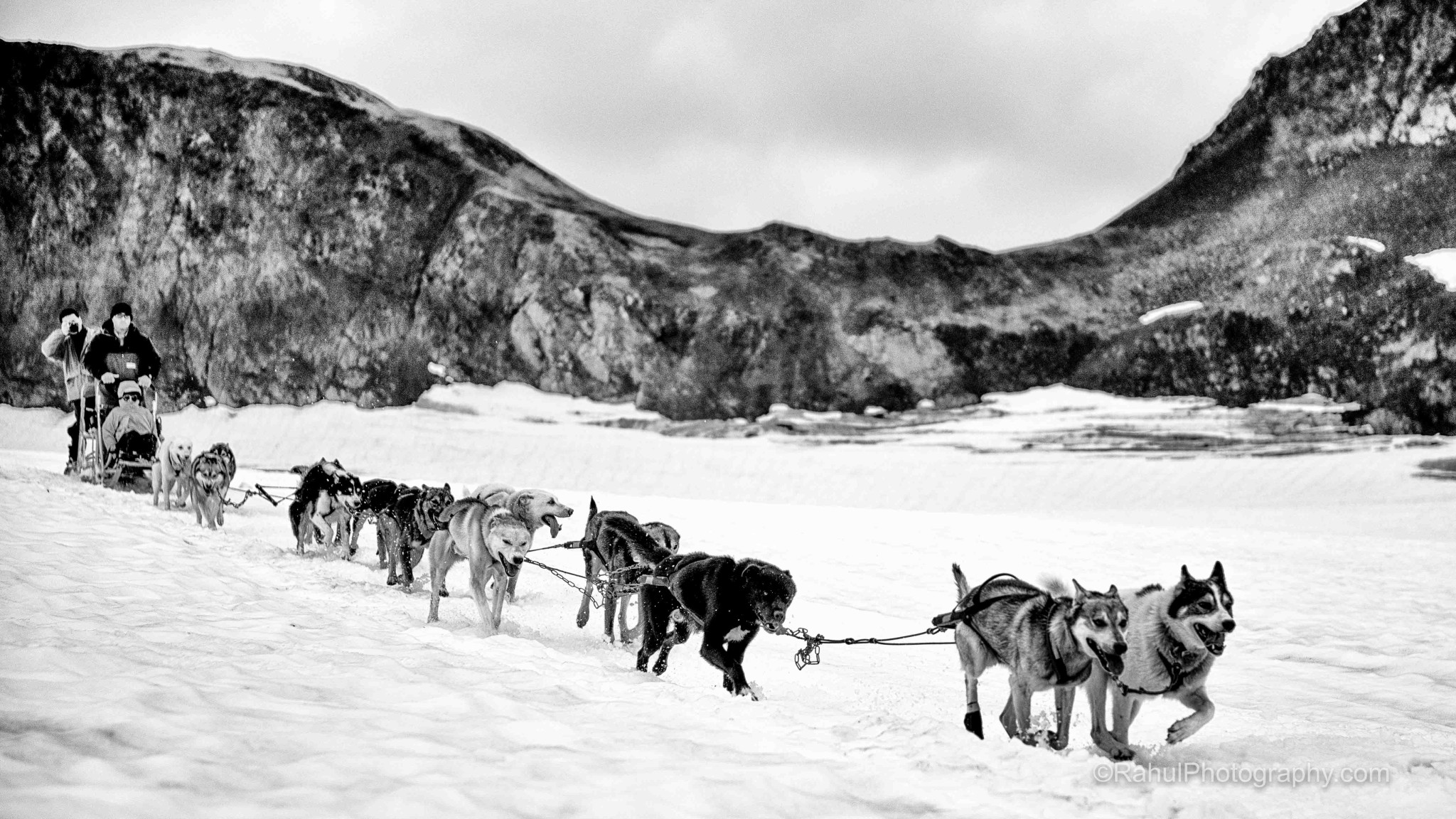 Dog Sledding on the Glacier